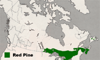 Map of Canada highlighting Ontario, Southern Quebec and the Maritimes as regions where Red Pines grow.