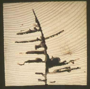 Termites2