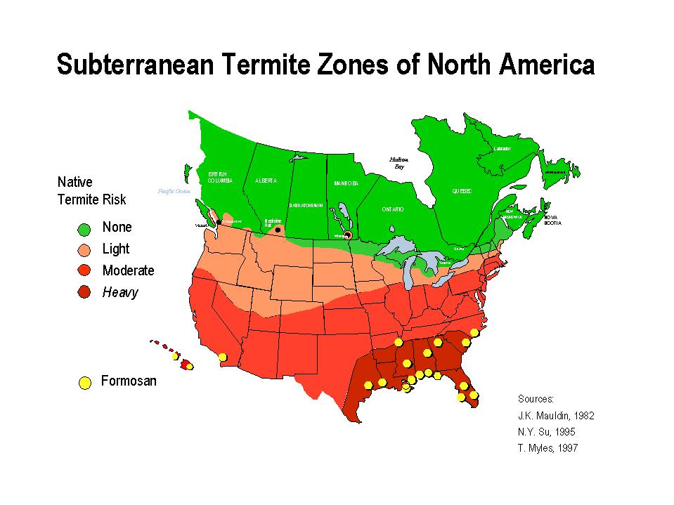 Image Result For Treatment For Termites